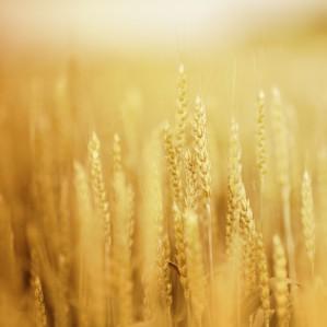 Extinderea pachetului Charisma pentru Agricultură
