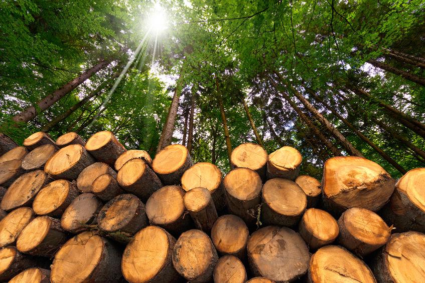Prelucrarea masei lemnoase la fabrica Silvania International se face utilizand sistemul integrat ASiS