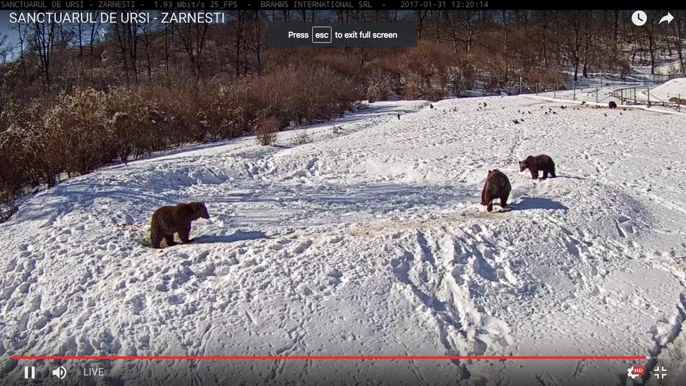 Sanctuarul Urşilor din Zărneşti,  live cu Axis Communications