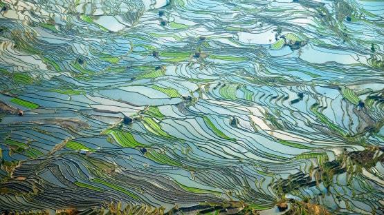 Tehnologia blockchain poate contribui la depășirea provocărilor de mediu la nivel global
