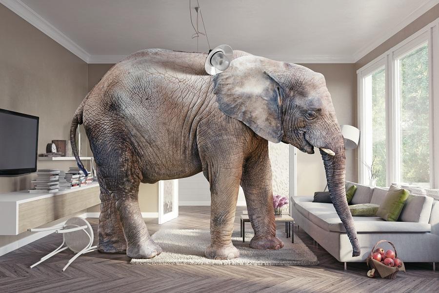 Elefantul din cameră