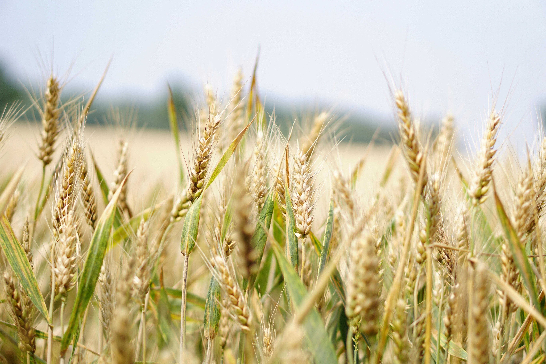 Bento Grânar, software pentru succesul campaniei agricole de primăvară!