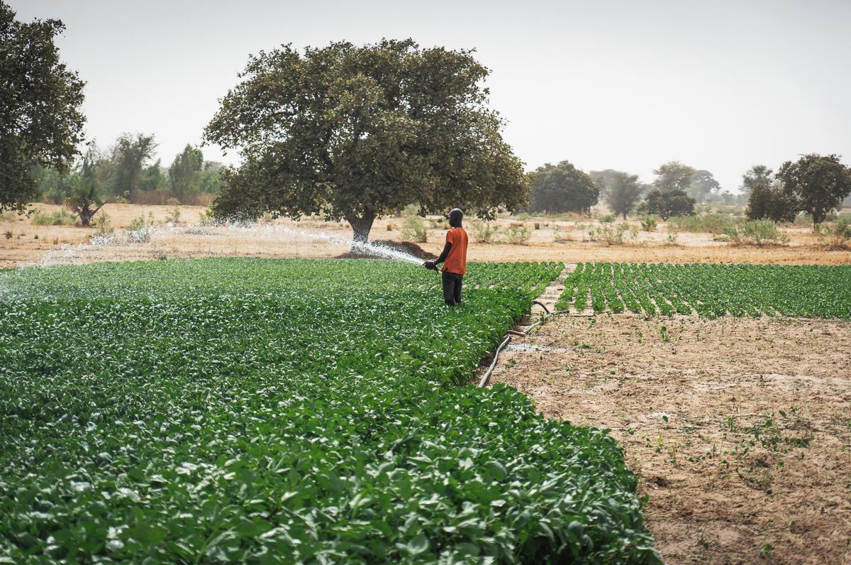 Wilo sprijină financiar proiectul ImpactSites al Africa GreenTec